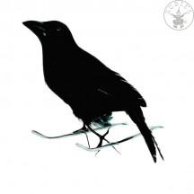Vrana čierna 15 cm